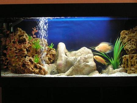 Thanks to the strict black color base and luminaire aquarium internal